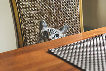 cat peeking over desk